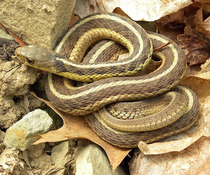 Węże ogrodowe w wolnym tłumaczeniu